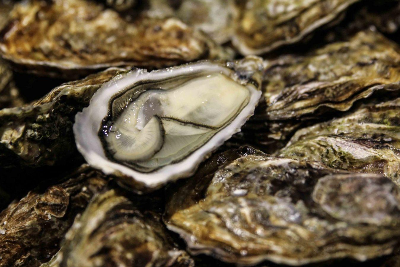 Huîtres fines de claires - Peponnet - Marennes d'Oléron