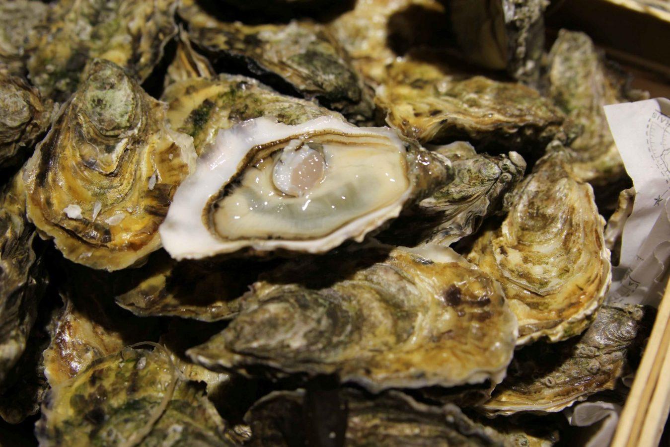 Huîtres Ostra Régal - Irlande