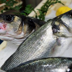 Bar sauvage entier, bar de ligne pêche responsable - vente en ligne poissonnerie albi