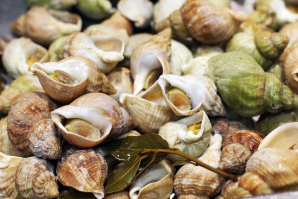 bulot cuits, pimenté ou nature - vente en ligne de fruits de mer poissonnerie Morin marée albi