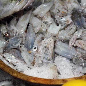 Calamars, vente en ligne de poulpes, calamars, seiche - poissonnerie albi