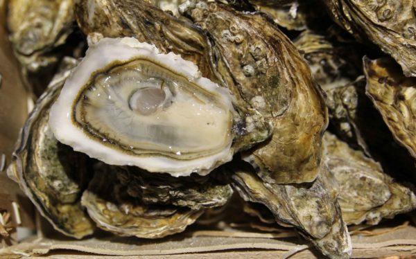 """Huîtres super spéciales """"Cœur d'Océan"""" Irlande, vente en ligne de bourriches d'huîtres - poissonnerie Morin marée Albi"""