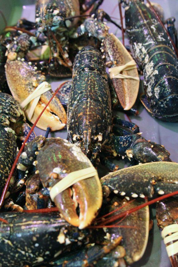 Homard bleu vivant, vente en ligne de crustacés vivants sur Albi et alentours