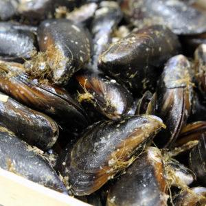 moules d'espagne XL, vente en ligne de fruits de mer à Albi