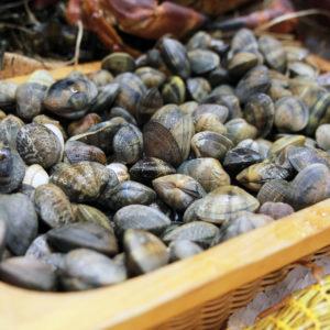 Palourdes, coquillages vivant, vente en ligne de produits de la mer et poisson frais sur Albi et environs