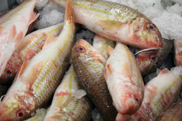 rouget barbet en vente sur le site internet de la poissonnerie Morin marée
