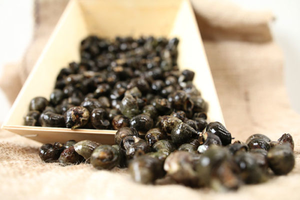 Bigorneaux jumbo VIVANT, vente en ligne poisson frais, fruits de mer vivants ou cuits, huîtres