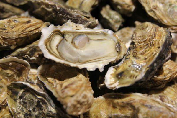 huîtres fines atlantique numéro 2 et numéro 3