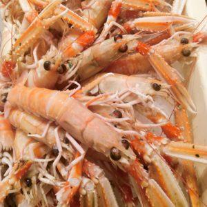 Langoustines CUITES, vente en ligne de langoustine cuites - poissonnerie morin marée albi
