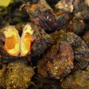 Violet VIVANT, vente en ligne de produits de la mer sur Albi et ses environs : poisson frais, coquillages cuits ou crus, huîtres