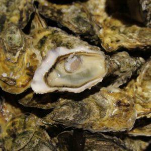 """Huîtres super spéciales """"Ostra Régal"""" irlande, vente en ligne de bourriches d'huîtres - poissonnerie Morin marée Albi"""