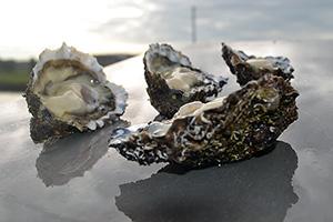 """Huîtres Royales """"Peponnet"""" N°3, vente en ligne de bourriches d'huîtres - poissonnerie Morin marée Albi"""