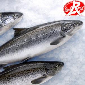 saumon label rouge entier - vente en ligne de poisson frais sur albi