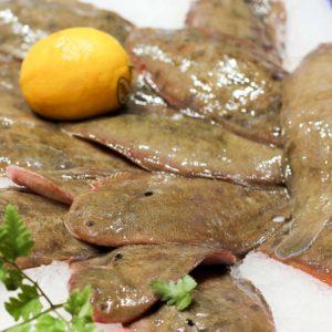 Sole, vente en ligne de poisson frais - sole pêche responsable - poissonnerie Morin marée