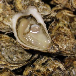 Huîtres spéciales d'Isigny N°3, vente en ligne de bourriches d'huîtres - poissonnerie Morin marée Albi