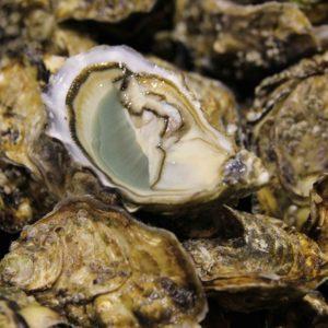 """Huîtres spéciales """"Peponnet"""", vente en ligne de bourriches d'huîtres - poissonnerie Morin marée Albi"""