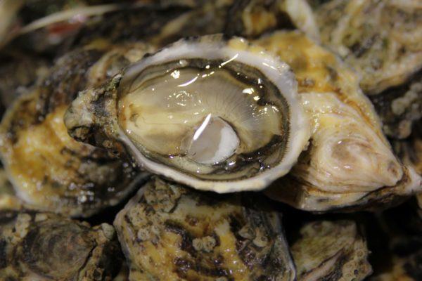 """Huîtres spéciales vertes Royales """"Roumégous"""", vente en ligne de bourriches d'huîtres - poissonnerie Morin marée Albi"""