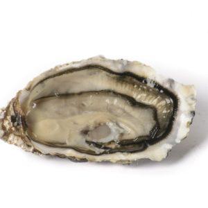 Huîtres spéciales Saint Vaast N°4, vente en ligne de bourriches d'huîtres - poissonnerie Morin marée Albi